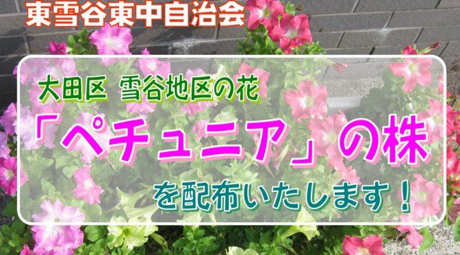 """「雪谷地区の花""""ペチュニア""""」の苗株を配布いたします!"""