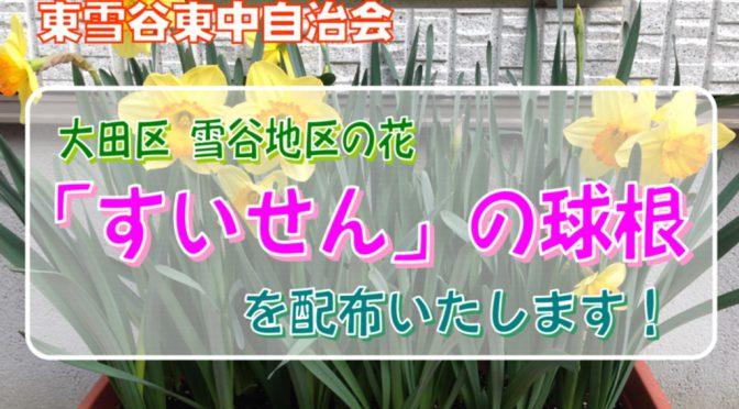 """「雪谷地区の花""""水仙""""」の球根を配布いたします!"""